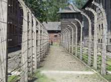 Fences at Auschwitz-1